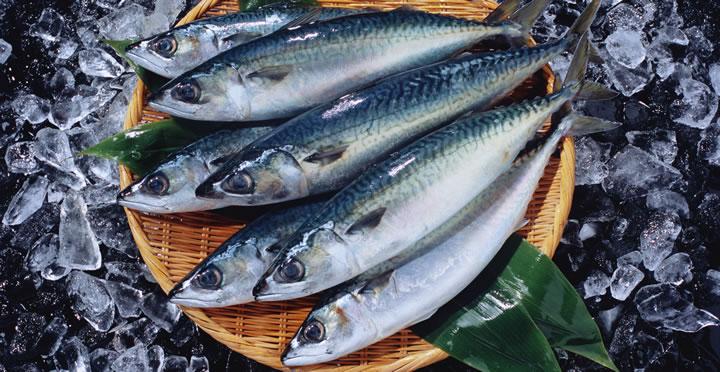 青魚にはDHAとEPAが豊富