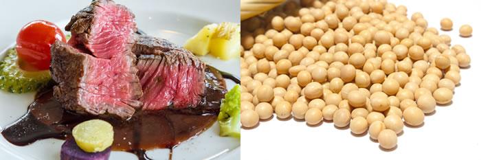 動物性たんぱく質と植物性たんぱく質の違い