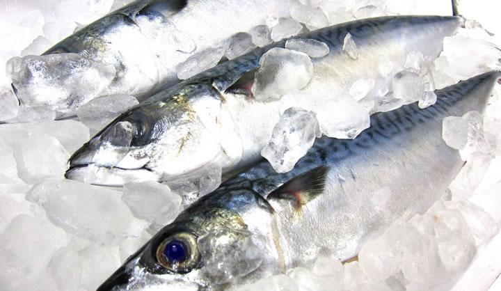 魚にはDHA(オメガ3)が含まれている
